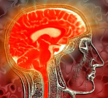 Ilustrações das imagens de varredura do cérebro