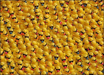 2013 Great Duck Race on the Duck Race