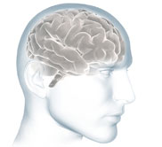 Illustration of Scanned Brain Image
