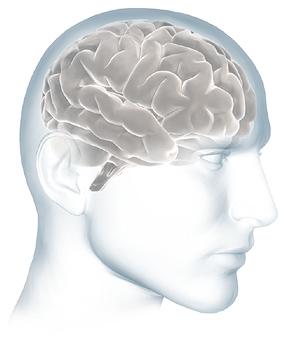 Para reducir la inflamación del cerebro tirando