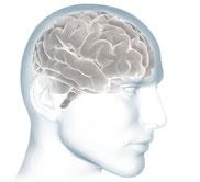 Illustration of Scanned Brain Image