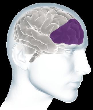 Inside the Brain - Brain Basics | Alzheimer's Association