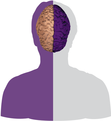 Inside the Brain - Brain Basics | Alzheimer's Association