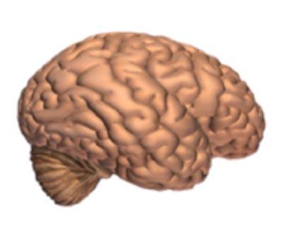 Alzheimer's Disease_Brain Tissue